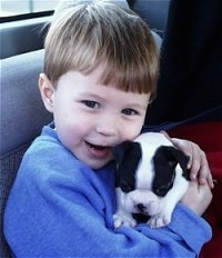 Close up - A boy in a blue sweatshirt is sitting in the backseat of a car and he has a black and white Boston Terrier puppy in his arms.