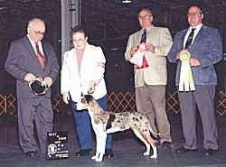 Louisiana Catahoula Leopard Dog at a dog show is posing in front of Four people. Two People are holding ribbons. One Person is holding the dogs leash