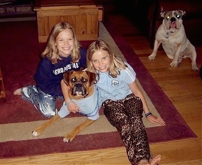 Two young girls are hugging Allie the Boxer who is wearing a light blue shirt and two purple and blue beaded necklaces. Spike the Bulldog is sitting near a staircase in the background watching