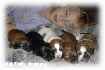 A blonde-haired girl is laying behind five little puppies on a rug.