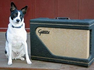A perk-eared, black with white Rat Terrier/Mountain Feist is sitting on a wooden porch with its head tilted to the right next to a Gretsen Amp.