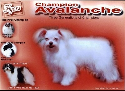A red Flyers Mi-Ki flyer that says 'Champion Avalanche Three Generations of Champions' with four dogs on the front of it .