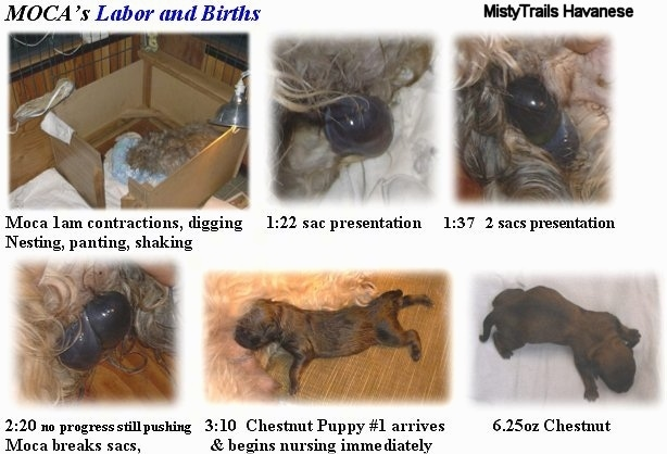 A combination of images that list the steps of a Labor and Birth.