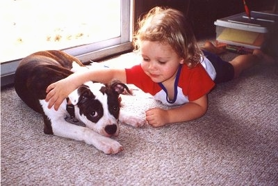 A brown brindle and white Olde Boston Bulldogge is laying down on a carpet and behind it is a sliding door. There is a baby laying on her belly next to it with her arm over top of the dog.