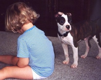 A baby with short bobbed blonde hair has its back turned to a brown brindle with white Olde Boston Bulldogge puppy that is standing to the right of the image.
