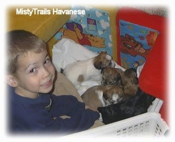 A smiling boy is sitting behind five small puppies.