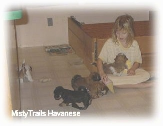 A girl is sitting cross legged leaning against a wooden whelping box and a puppy is sitting in her lap. There are four other puppies around them playing.