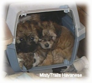 Five puppies are laying inside of a crate.