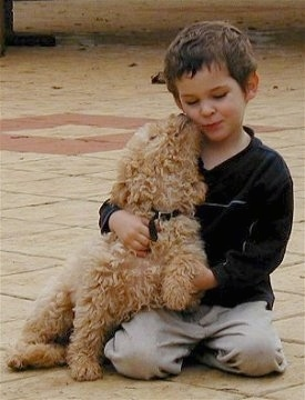 A tan Australian Labradoodle is sitting on that ground and licking a the face of a boy that is sitting next to it.