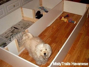 A long coated little white mother dog is standing in a Whelping Box and in another part of the whelping box is a litter of puppies.