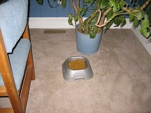 Close Up - Food Bowl in front of a potted plant