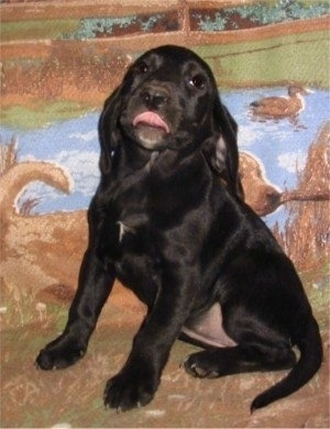 A black Labbe puppy is sitting on and in front of a blanket with a dog carrying a stick, water and a duck. The Labbe puppy is licking its mouth.