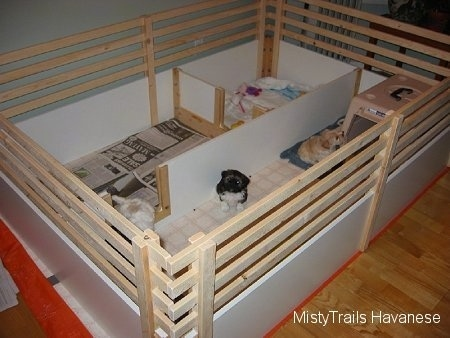 A whelping box that has five sitting little puppies in it. The box has solid wooden sides with wooden railings above them and dividers for rooms.