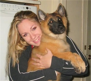 Riot the Belgian Tervuren puppy being hugged by its owner