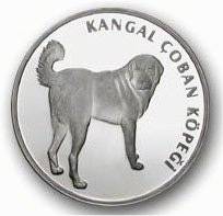 Kangal Coin issued by the Turkish government. A sideview of the dog with its tail up and the dog looking back