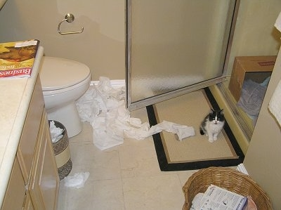 Unrolled toilet paper in front of a toilet with an open shower door and a kitten sitting in front of the shower door on a rug