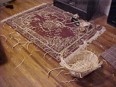 A chewed up wicker basket in front of a rug with wicker pieces all over it