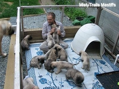 Man still pLaying with puppies