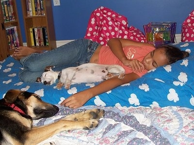 Jedi the Jack Russell and Koda the Shepherd Collie mix laying on the bed with a girl
