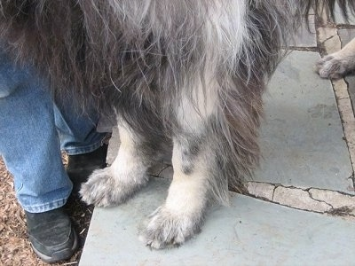 Close Up - Dog's legs turning from black to white