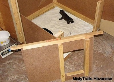 Two Puppies in the wooden whelping box in which the front is removed