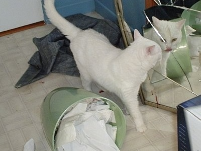 A pure white cat is walking in front of a broken mirror and looking at itself with a fallen over green trash can next to it
