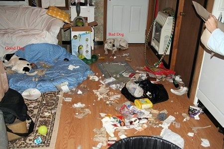 There is a dog sitting in front of a door and another dog laying on a dog bed. There is trash spread throughout the whole room. The Dog on the dog bed has the words 'Good Dog' over it and the other dog has the words 'Bad Dog' over it.