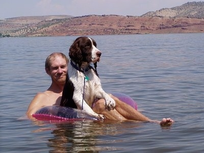 Bently the English Springer Spaniel is floating on a tube on top of a man. They are in a large body of water