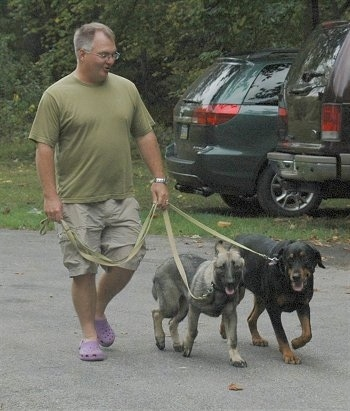 Two Dogs are being walked across a parking lot, heeling next to their owner