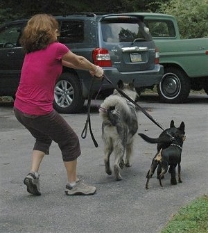 Close Up - The back of a lady that is being pulled by three dogs on leashes across a parking lot