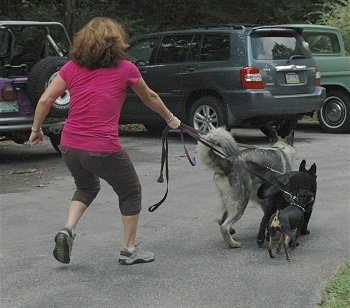 The back of a lady, that is wearing a pink shirt, is being dragged across a parking lot by three dogs on leashes