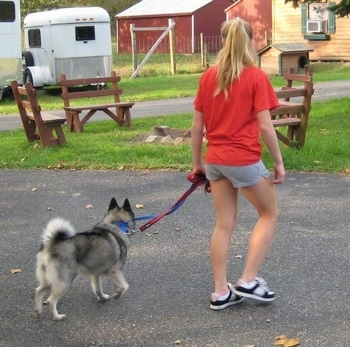 The back right side of a dog being trained to walk by a blonde-haired girl across a blacktop surface.