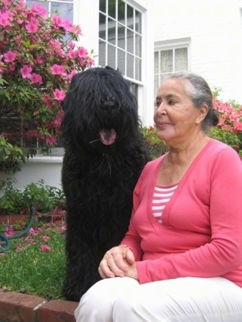 Boris the Black Russian Terrier sitting next to a lady with his mouth open and tongue out