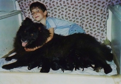 A black Giant German Spitz is laying down and nursing a litter of puppies. There is a boy behind the dog hugging it