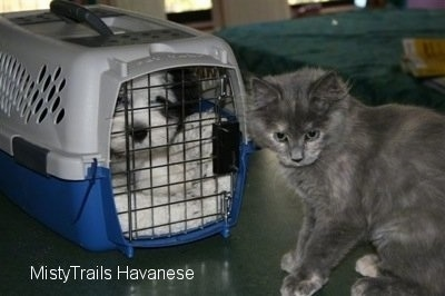 Puppy in a travel crate with a cat in front of it