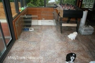 Two puppies walled in by a cage