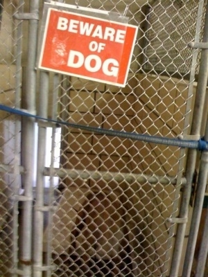Cage with the a sign that says 'Beware of DOG' with a dog inside of it