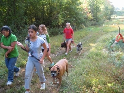 A group of girls are leading three dogs on a walk through the woods.