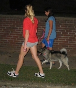 A girl in a red shirt and a girl in a blue shirt are leading a black, grey and white Norwegian Elkhound on a walk. The dog is panting.