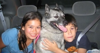 A boy and a girl are hugging the sides of a black, grey and white Norwegian Elkhound. The dogs mouth is open and tongue is out.