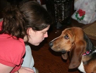 A Lady and a Basset Hound having a staring contest