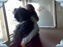 Zevs the Black Russian Terrier looking out of a window next to a person