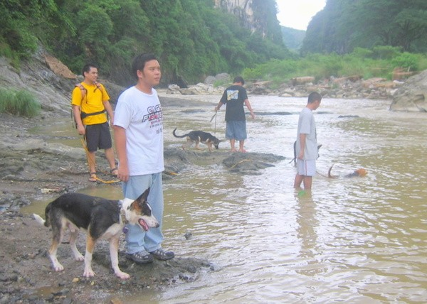 Four people and four dogs at a brown river - A black with tan and white Panda Shepherd is standing next to a person in mud. It is looking down at the brown water in front of it. There are three other people with dogs in the water.