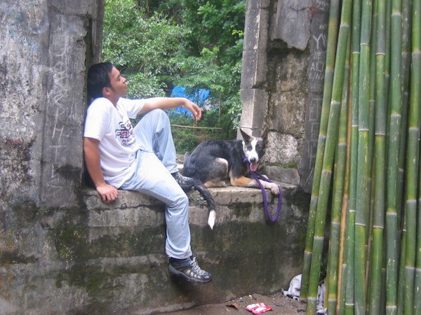 A black with white and tan Panda Shepherd dog is laying in an opening in the ruins of a stone building. There is a person sitting against the wall behind it. There is several stalks of bamboo in front of them.