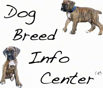 Dog Breed Info Center(R) is displayed and two pictures of Bruno the Boxer as a Puppy are in two corners