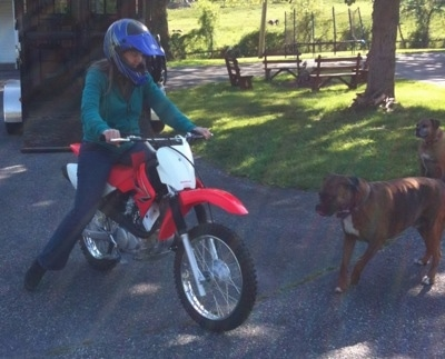 A person riding a dirt bike in front of Allie and Bruno the Boxers