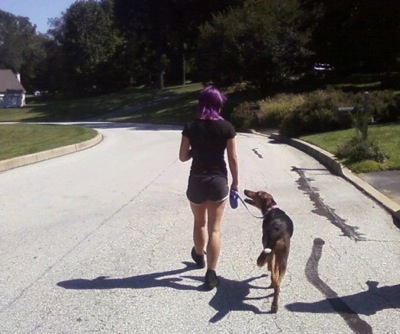 A purple-haired girl is leading a Dog on a walk down a street