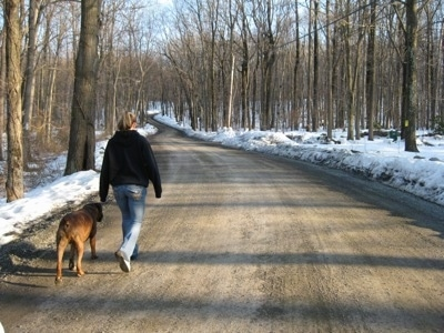 The back of a person that is wearing a black Hoodie and to the left of them is a brown dog. They are going on a no leash walk up a trail.