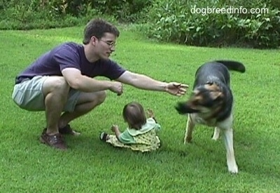 Dog in yard running around a baby girl and her father blocking the dog