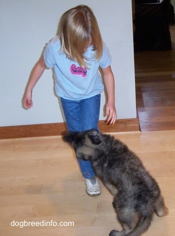 A puppy jumping on and biting a childs leg
